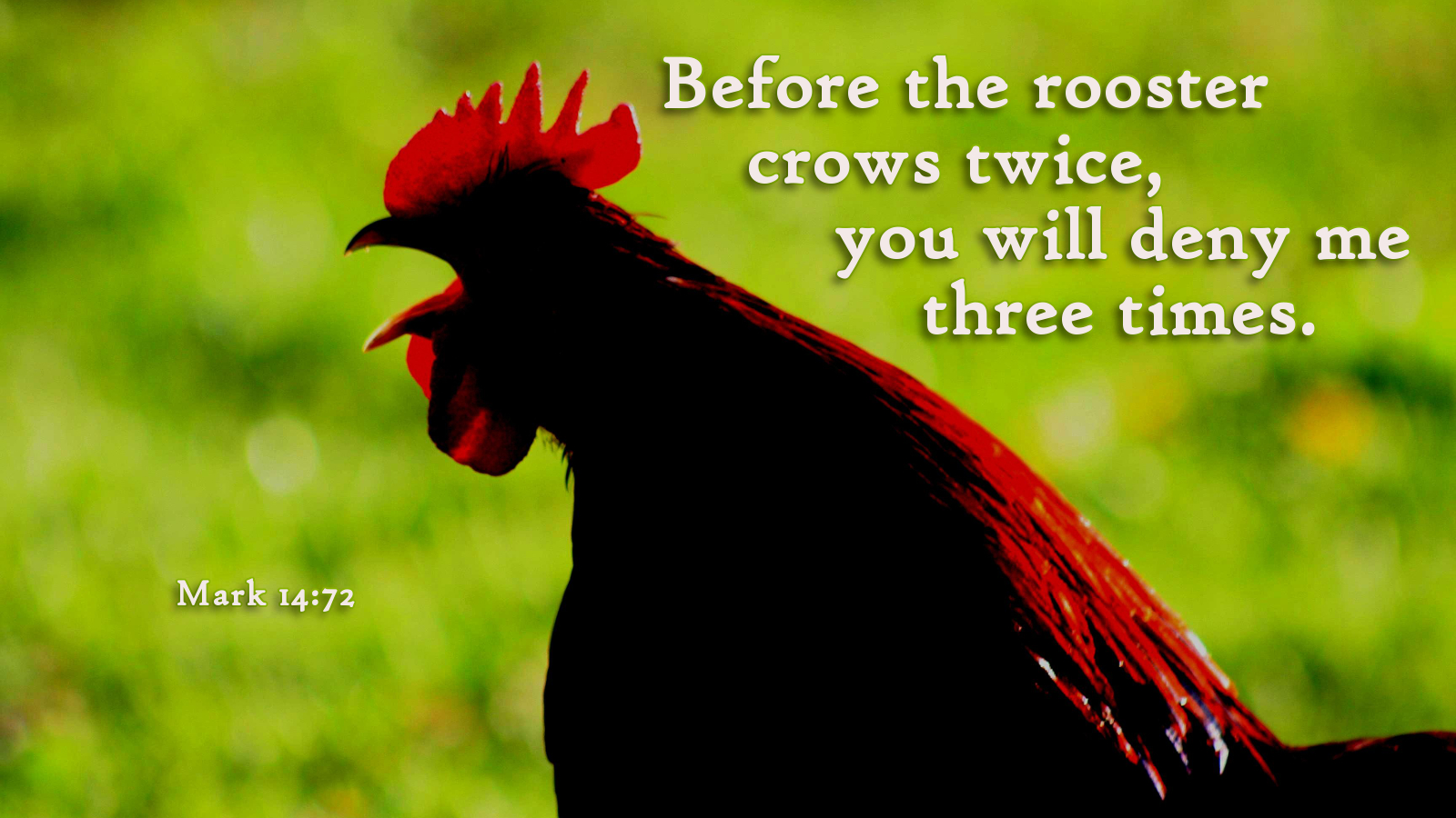 Cock crows three times